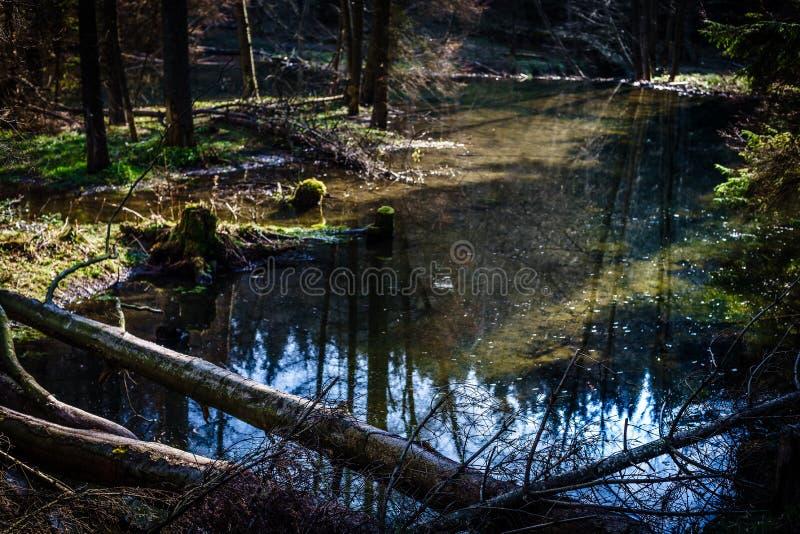 Een berg natuurlijke rivier in het bos, bevers royalty-vrije stock fotografie