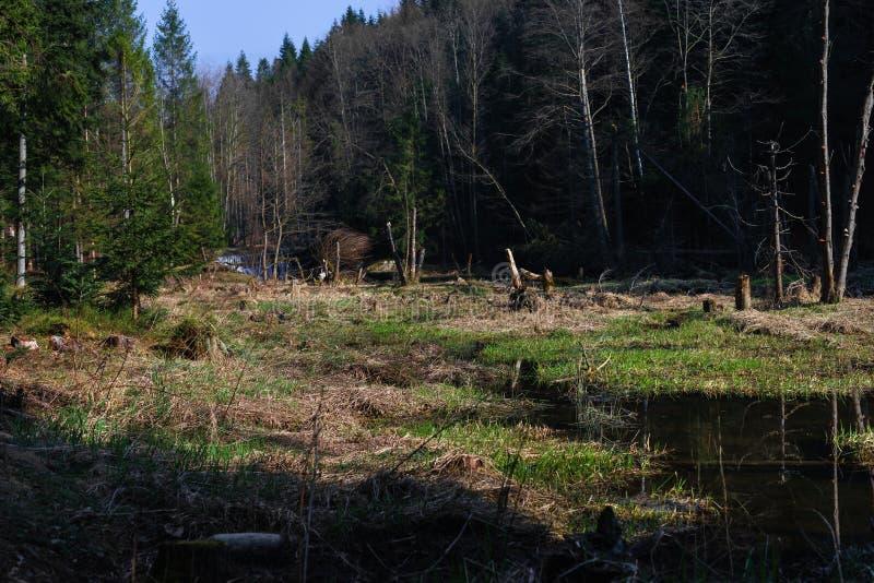 Een berg natuurlijke rivier in het bos, bevers royalty-vrije stock afbeelding