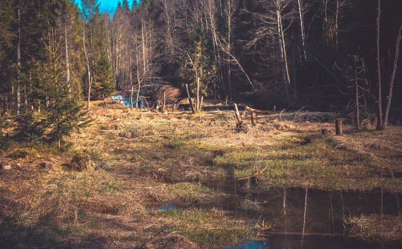 Een berg natuurlijke rivier in het bos, bevers royalty-vrije stock foto's
