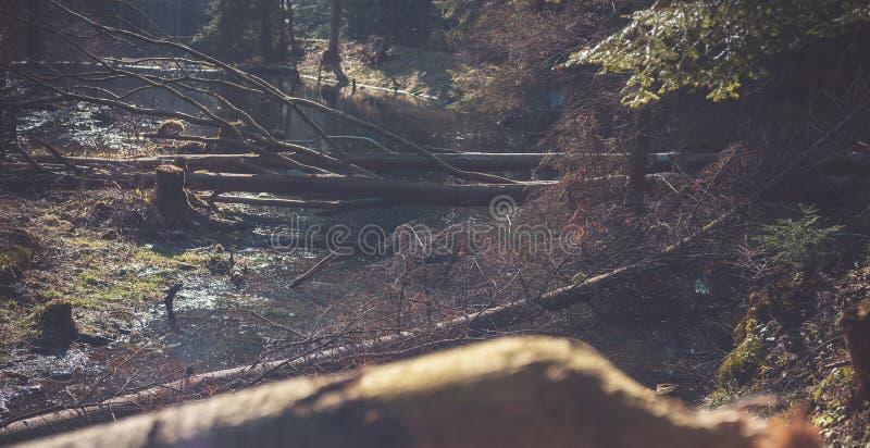Een berg natuurlijke rivier in het bos, bevers stock afbeeldingen