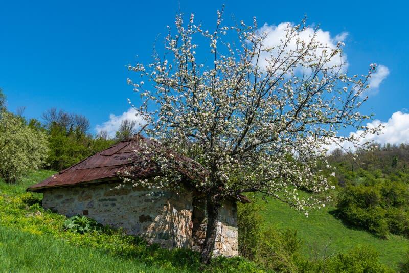 Een berghuis met een mooie boom groeit Mooie Aard in Servi? stock afbeelding
