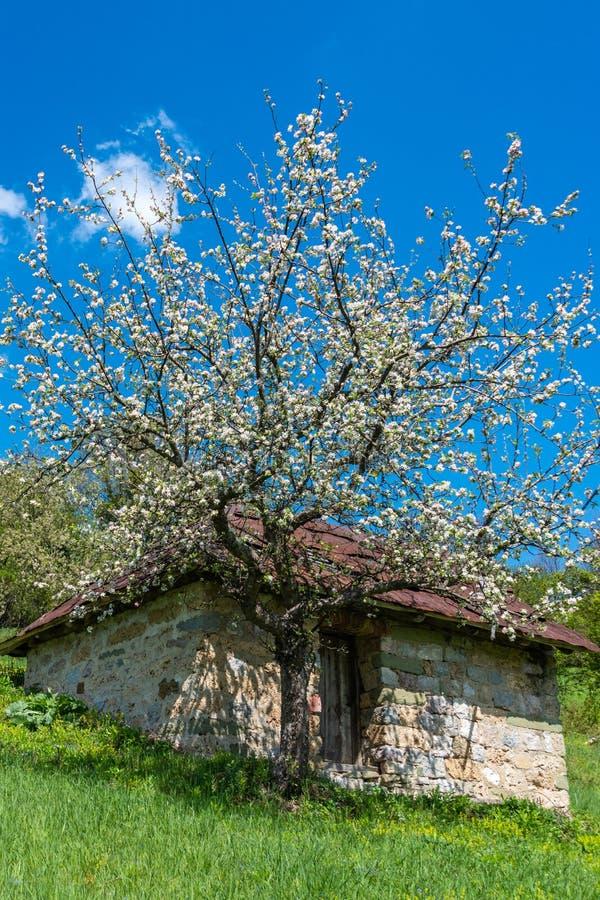 Een berghuis met een mooie boom groeit Mooie Aard in Servi? royalty-vrije stock afbeeldingen