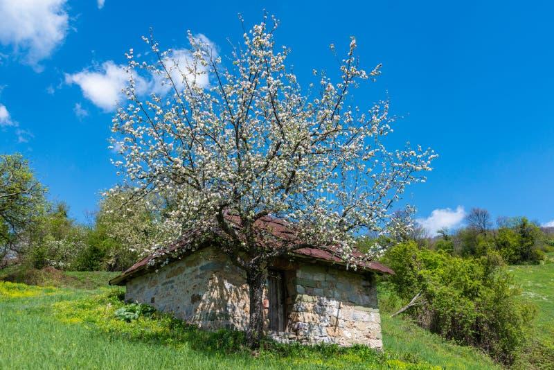Een berghuis met een mooie boom groeit Mooie Aard in Servi? royalty-vrije stock afbeelding