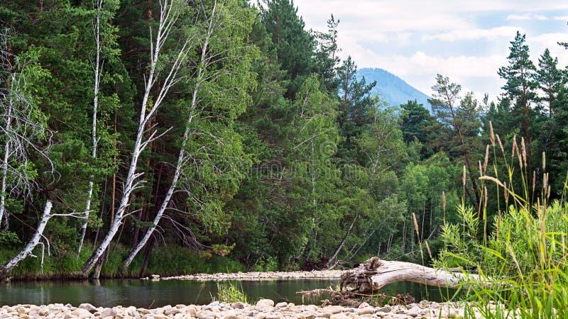 Een bergrivier bij de voet van de heuvel met groene bomen, witte wolken op blauwe hemel, Altai-Bergen, Kazachstan royalty-vrije stock afbeelding