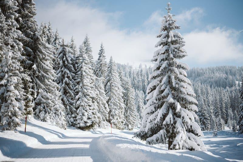 Een bergweg en snow-covered pijnbomen stock foto