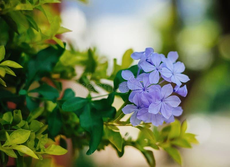 Een besnoeiing en beautil bloeit in een aardige tuin stock afbeeldingen