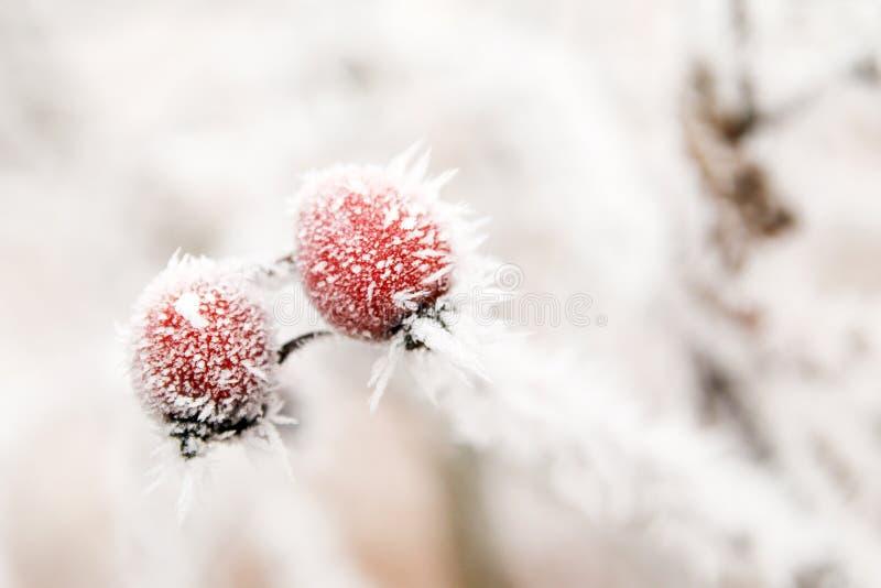 Een bevroren tak met briers stock foto's