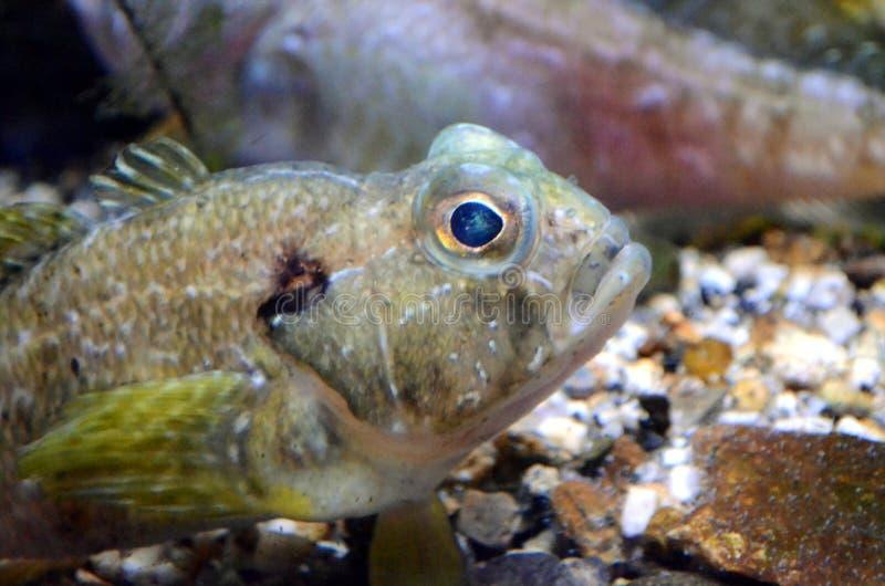 Een bezoek in beroemd het Aquarium van Genua in het Italiaans Acquario Di Genua het grootste aquarium in Italië en onder het groo stock fotografie