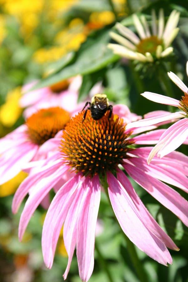 Een bij in tuin 2 stock afbeelding