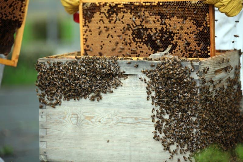 Een bijenkorf stock afbeeldingen