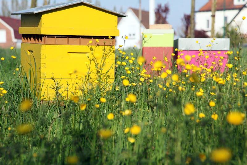 Een bijenkorf royalty-vrije stock foto