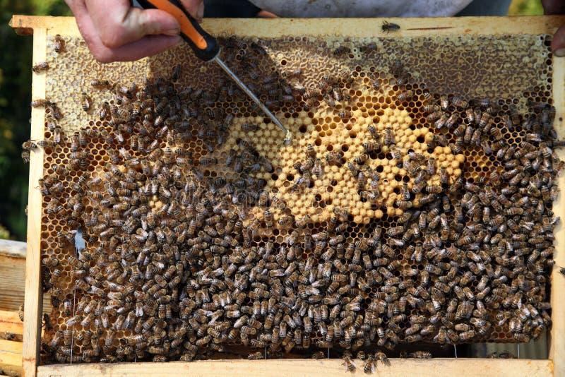 Een bijenkorfkader stock afbeelding