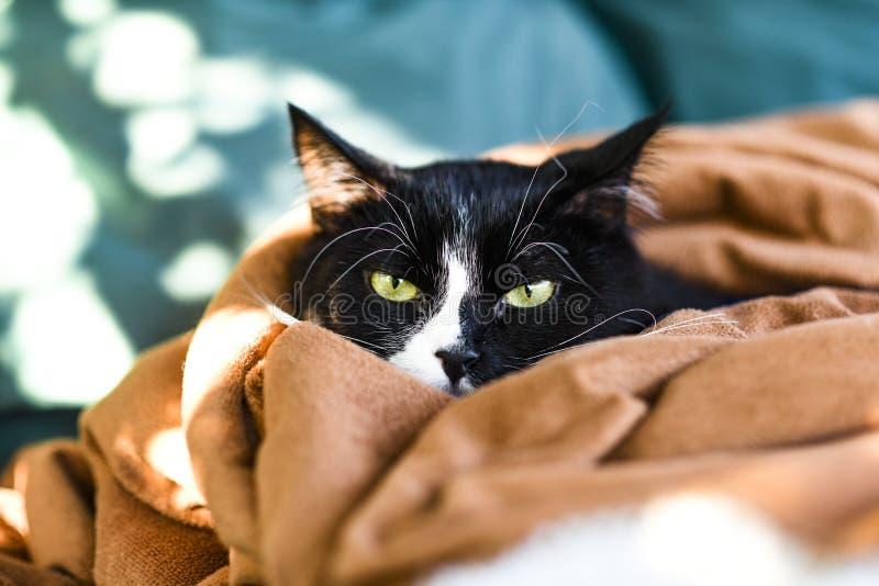 Een binnenlandse kat die in een deken rusten stock fotografie