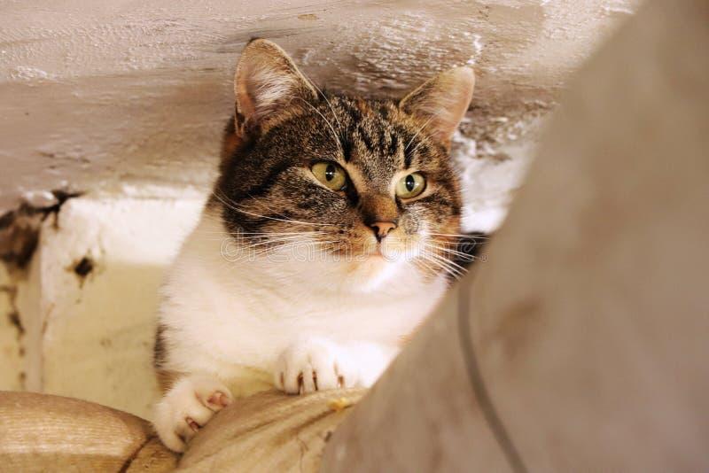 Een binnenlandse kat ligt rond Zij die op pijp over oven bij kelder ontspannen Multi gekleurd gezicht van kat met groene ogen het royalty-vrije stock foto's