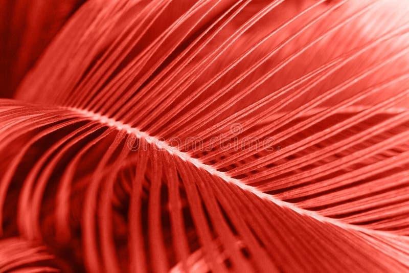 Een blad van varen in kleur het leven koraal stock foto's