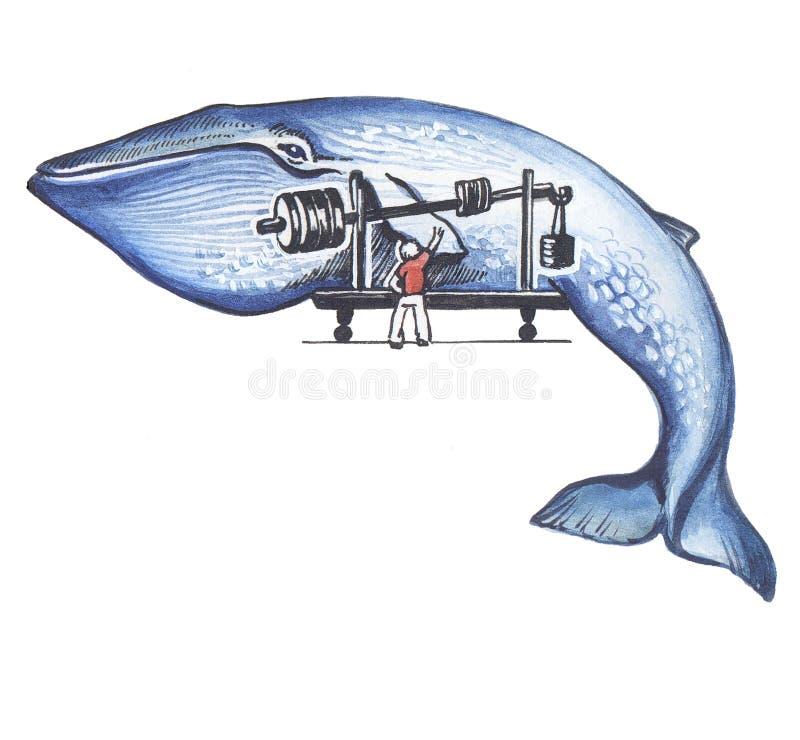 Een blauwe vinvis. stock illustratie