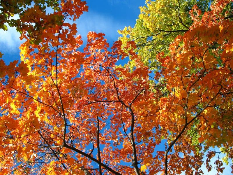 Een blik op de hemel in de herfstbos stock afbeelding