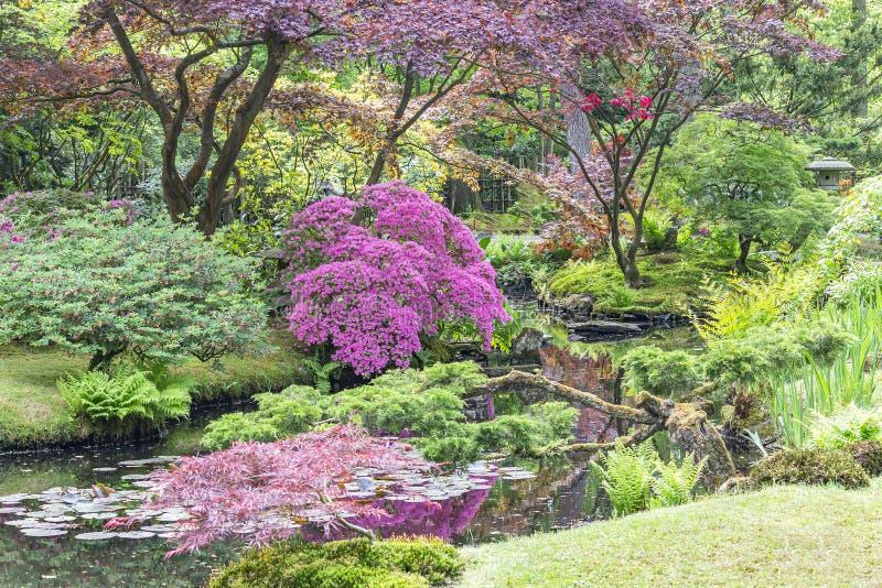 Een blik over een stroom met azalea's, varens en acers aan een beeld van een pagode in de Japanse tuin in park Clingendael, Den H stock foto