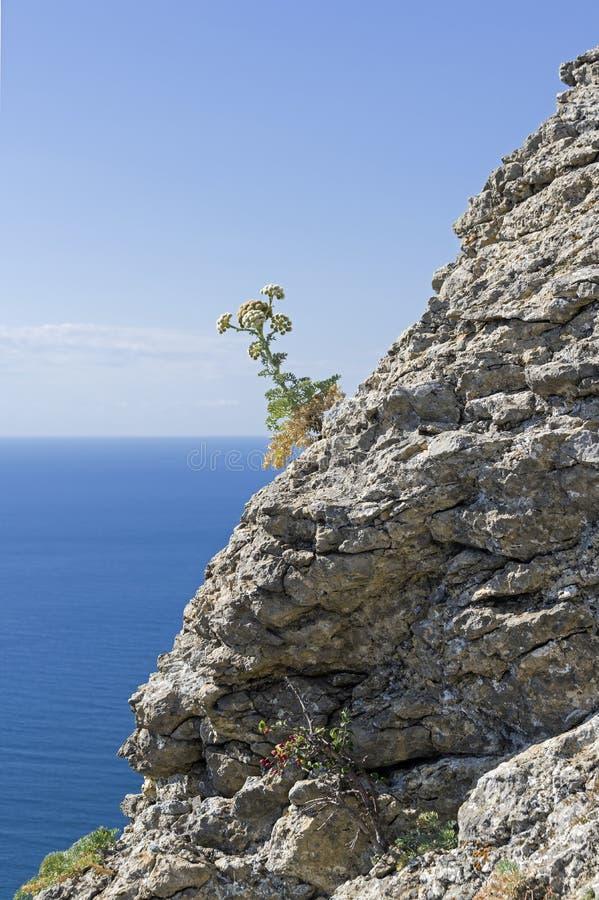 Een bloeiende installatie op de kustrots royalty-vrije stock fotografie
