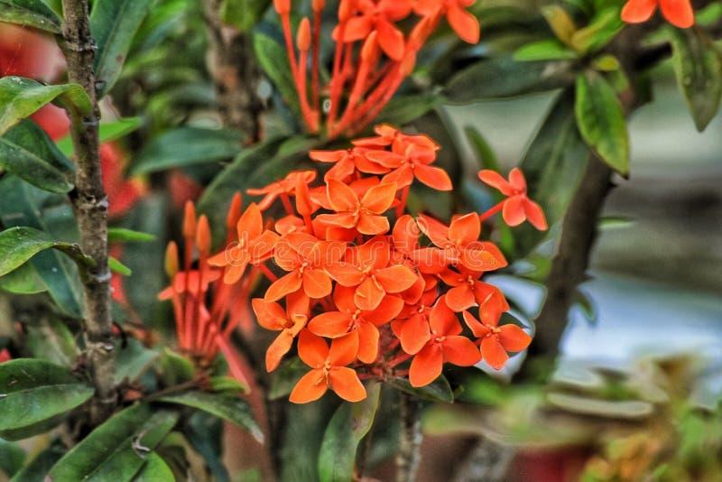 Een bloem royalty-vrije stock foto's