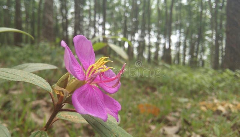 Een bloem is een symbool van liefde royalty-vrije stock foto's