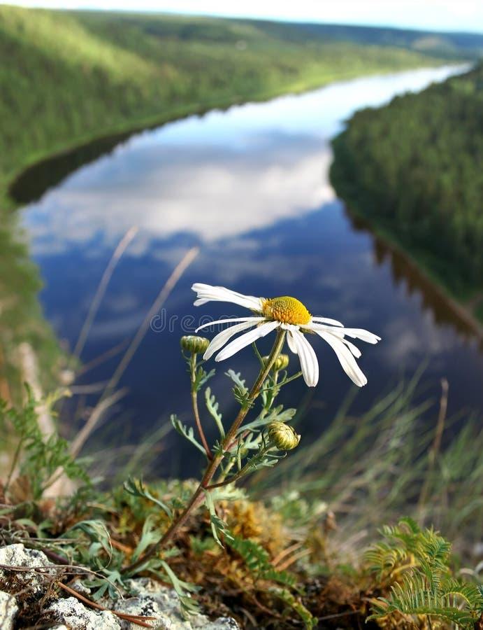 Een bloem op een klip stock foto's