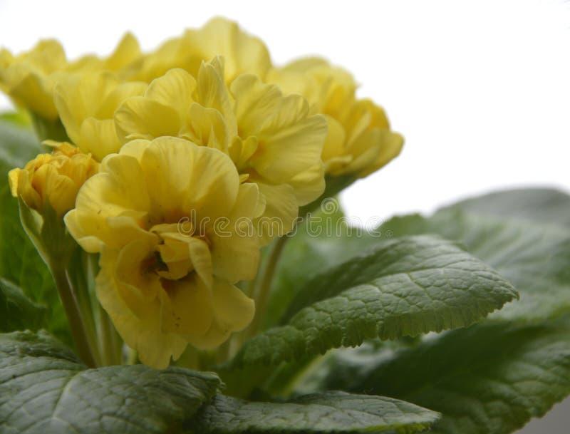 Een bloem in een pot stock afbeelding