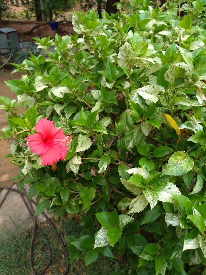 Een bloem in tuin met boom royalty-vrije stock afbeelding