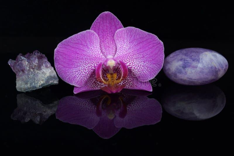 Een bloem van een roze orchidee tussen verschillende violetkleurige stenen op een zwarte achtergrond royalty-vrije stock afbeelding