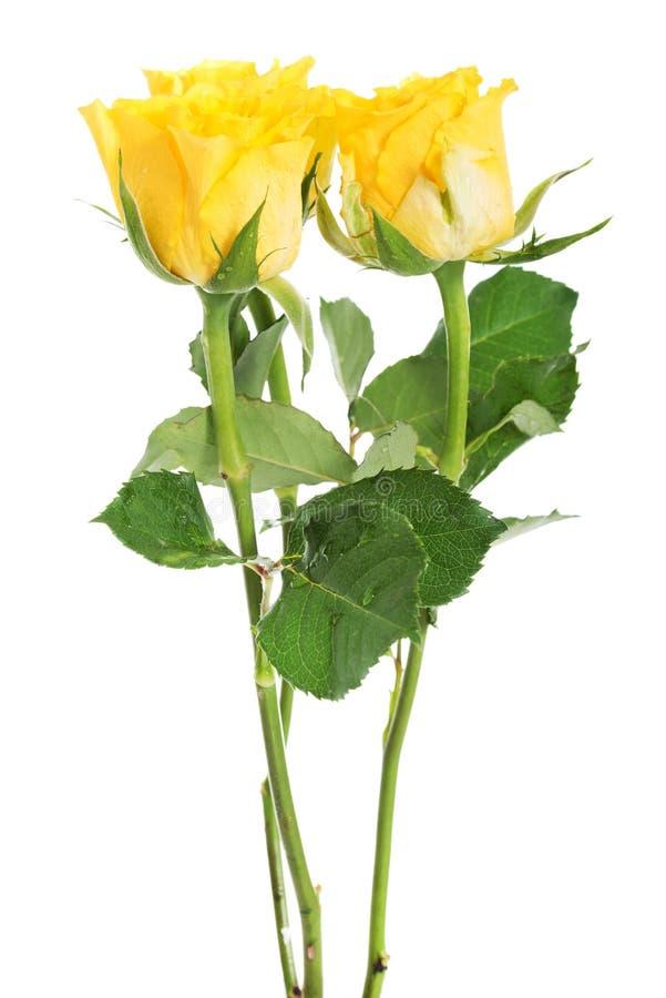 Een boeket van drie gele rozen. stock foto