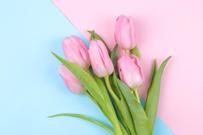 Een boeket van mooie roze tulp bloeit op een in roze en blauwe multicolored achtergrond De lente vakantie Hoogste mening royalty-vrije stock afbeeldingen