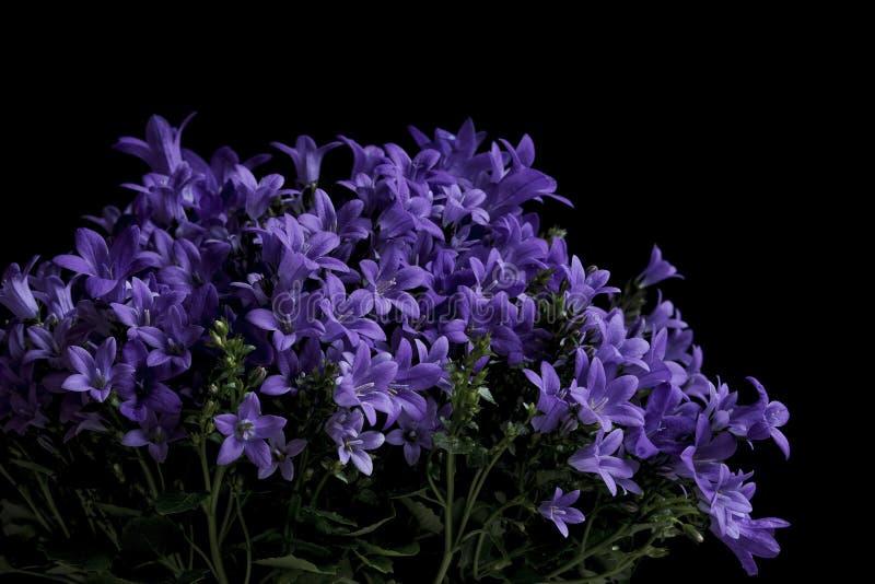 Een boeket van purpere die bloemen op een zwarte achtergrond worden geïsoleerd stock foto