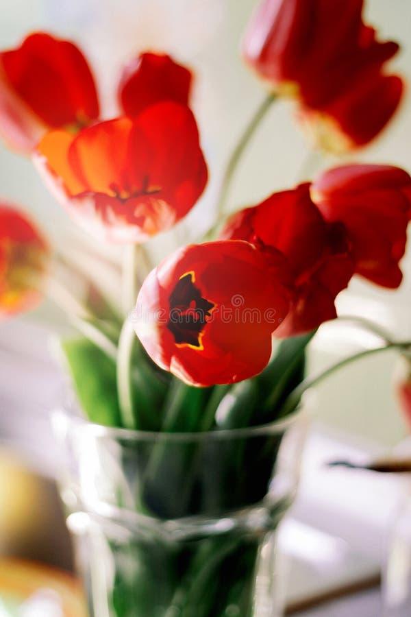Een boeket van rode tulpen in een vaas op de vensterbank Een gift aan de dag van een vrouw van rode tulp bloeit stock afbeelding