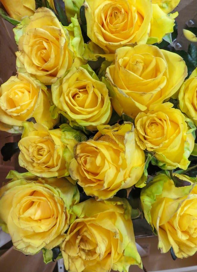 Een boeket van verse mooie gele rozen in een vaas royalty-vrije stock foto's