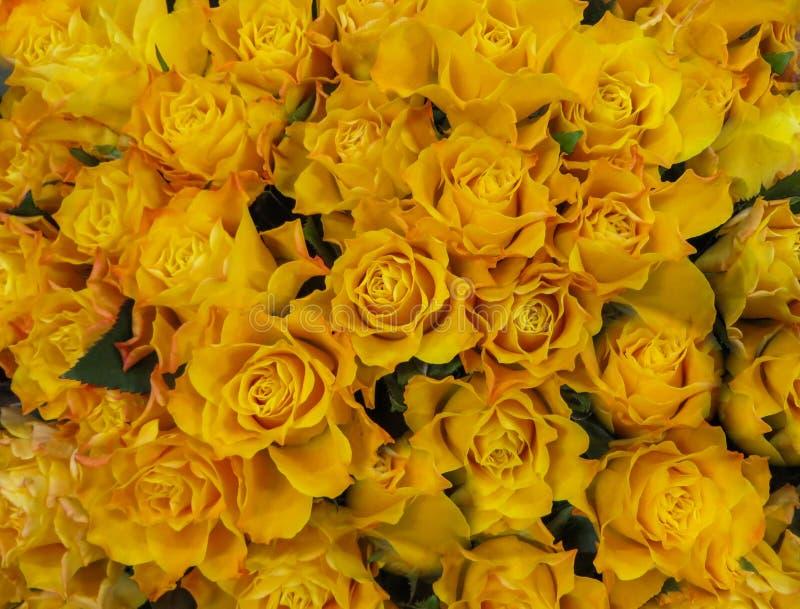Een boeket van verse mooie gele rozen in een vaas stock afbeelding