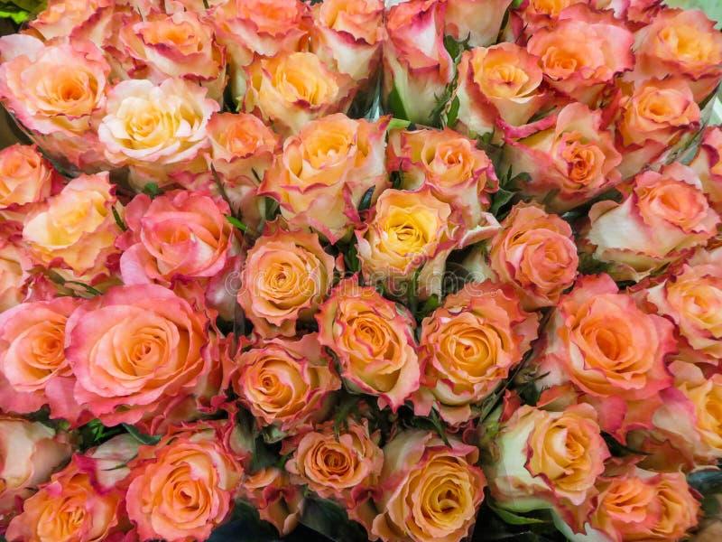 Een boeket van verse mooie oranje rozen in een vaas stock foto's