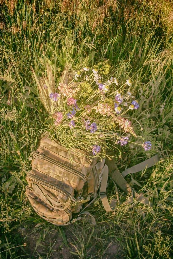 een boeket van wilde bloemen in een militaire rugzak royalty-vrije stock afbeeldingen