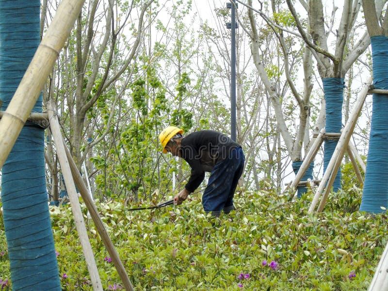 Een boerarbeider die over bloemen buigen te kweken stock foto