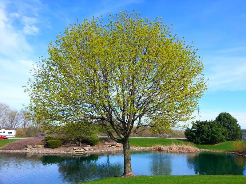 Een boom stock foto