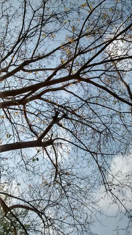Een boom als magisch royalty-vrije stock fotografie