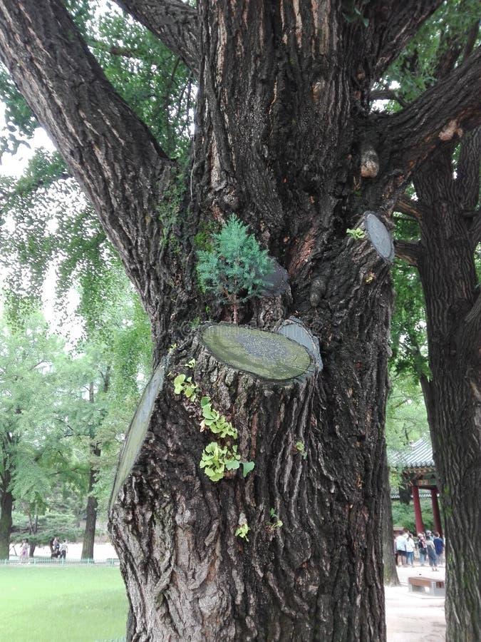 Een boom binnen een boom stock afbeeldingen