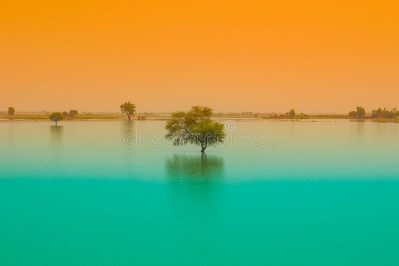 Een boom in een blauw watermeer met zonsondergangachtergrond royalty-vrije stock afbeeldingen