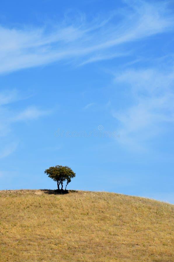 Een boom bovenop de heuvel in de zomer royalty-vrije stock afbeeldingen