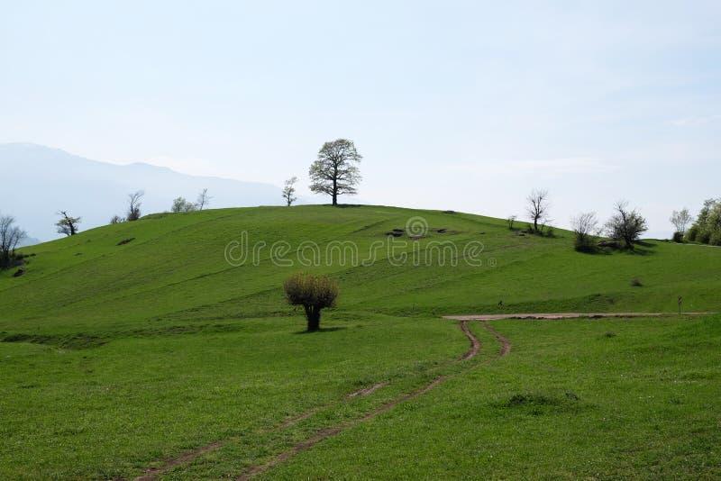 Een boom bovenop een groene heuvel royalty-vrije stock foto's