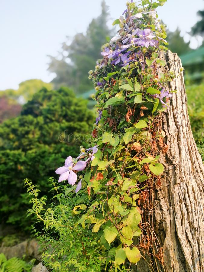 Een boom in de Buchart-Tuin in Vancouver〠' royalty-vrije stock foto