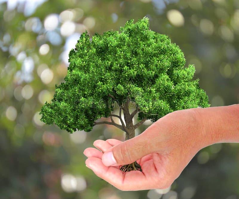 Een boom in de hand het groeien zaailingen De groene achtergrond van Bokeh vector illustratie