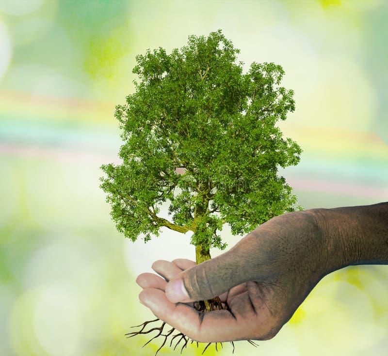 Een boom in de hand het groeien zaailingen Groene Bokeh en regenboog Backgroun vector illustratie