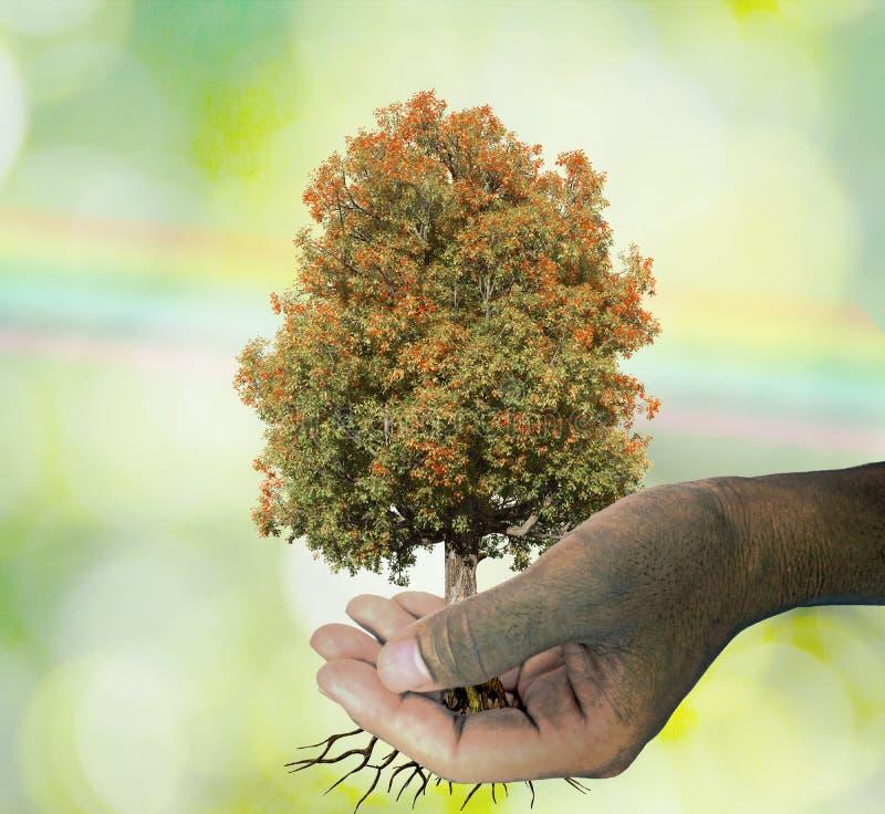 Een boom in de hand het groeien zaailingen Groene Bokeh en regenboog Backgroun royalty-vrije stock foto
