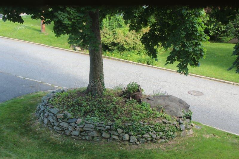 Een boom in de voorsteden van New York stock afbeelding