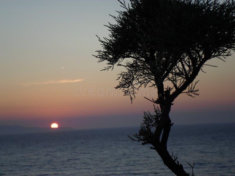Een boom die zich tegenover de zonsondergang bevinden stock foto
